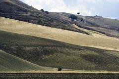 взгляд puglia холмов gargano Стоковая Фотография RF
