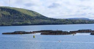 Взгляд Salmon фермы в Digby, Новой Шотландии 4K акции видеоматериалы