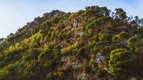 Взгляд sunlit горы лета покрытой лесами против голубого ясного неба, Budva, Черногории Стоковая Фотография RF