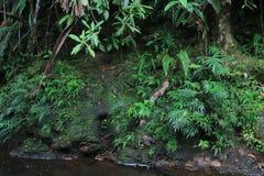 Взгляд Tyical джунглей или тропического тропического леса с много теней  стоковые фотографии rf