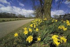 взгляд warwickshire сердца имущества en Клинтона baddesley Стоковое Фото