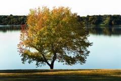 взгляд берега озера спокойный Стоковые Фотографии RF