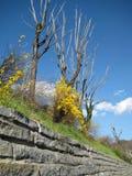 взгляд весны Стоковое Изображение RF