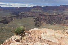 Взгляд внутреннего грандиозного каньона Стоковое фото RF