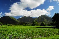 взгляд Гавайских островов панорамный Стоковая Фотография