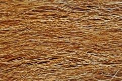 взгляд текстуры шерсти близкой собаки предпосылки весьма Стоковое Изображение