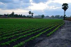 Взгляд аграрного края Стоковое Изображение