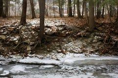Взгляд ландшафта деревьев зимы страшный Стоковое Изображение RF