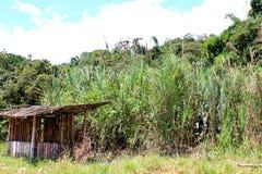Взгляд ландшафта Mindo эквадора с кабиной сахарного тростника Стоковая Фотография