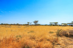 Взгляд африканской саванны Стоковые Изображения