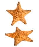 2 взгляда рыб звезды Стоковые Фото