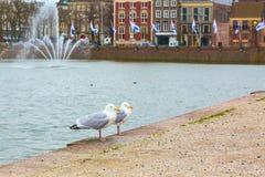 2 взгляда с голландскими домами, озеро чайок и улицы в Гааге, Голландии Стоковые Изображения RF