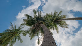 Взгляд верхней части кокосовой пальмы Стоковые Изображения
