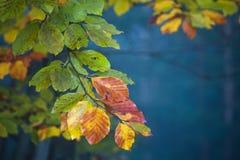 Взгляд ветви с красочными листьями на дереве осени Стоковые Изображения