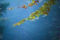 Взгляд ветви с красочными листьями на дереве осени Стоковая Фотография RF