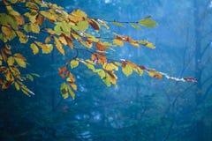 Взгляд ветви с красочными листьями на дереве осени Стоковая Фотография