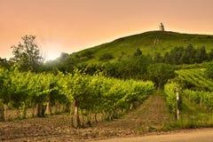 Взгляд вечера виноградников Стоковое Изображение RF