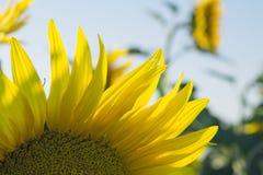 взгляд взморья patmos острова дня солнечный Стоковые Фото