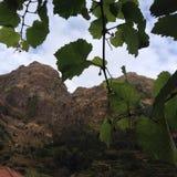 Взгляд виноградин Стоковая Фотография RF