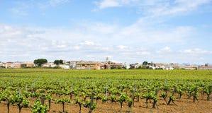 Взгляд виноградника в Penedes стоковое фото rf