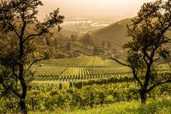 Взгляд виноградника Штутгарта Стоковая Фотография RF