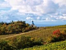 Взгляд виноградника Стоковые Фото