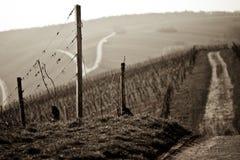 Взгляд виноградника стоковая фотография rf