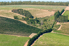 Взгляд виноградников около Somerset West, Южной Африки Стоковые Изображения