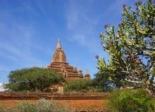 Взгляд висков Bagan, Мьянма Стоковые Изображения