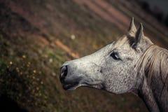 Головка лошади Стоковое Изображение RF