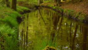 Взгляд в зеленом лесе с заводью сток-видео