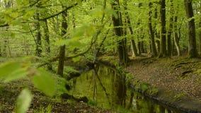 Взгляд в зеленом лесе с заводью видеоматериал