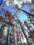 Взгляд в небо стоковое фото