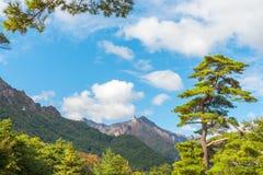 Взгляд в свете утра, парк падения Seorak Seoraksan Стоковые Фотографии RF