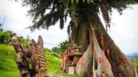 взгляд гигантского дерева украшенный традиционно с красными прокладками сток-видео