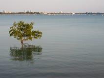 Взгляд города над заливом, Австралии Дарвина Стоковая Фотография RF