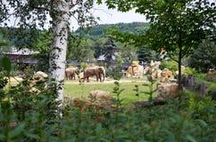 взгляд городка республики cesky чехословакского krumlov средневековый старый Прага Зоопарк Праги Слоны 12-ое июня 2016 Стоковое Изображение RF