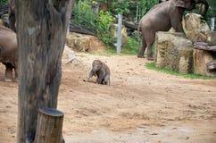 взгляд городка республики cesky чехословакского krumlov средневековый старый Прага Зоопарк Праги принятое фото 2009 слона младенц Стоковое Фото