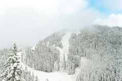 Взгляд горы в утре, Вашингтона снега Стоковые Фото