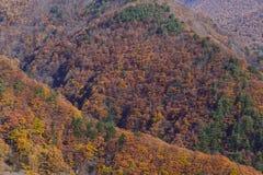 Взгляд горы с красочными листьями Стоковое фото RF