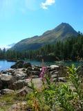 Взгляд гор в швейцарских Альпах Стоковая Фотография RF