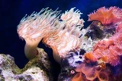 взгляд голубых цветов мягкий подводный Стоковые Изображения