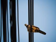 Взгляд голубя на камере на проводе Стоковое Фото