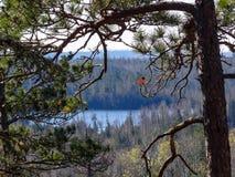 Взгляд границы мочит озера с сосной в переднем плане Стоковые Фотографии RF