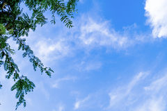 Взгляд густолиственного зеленого лиственного дерева против неба заволакивает Стоковое Изображение