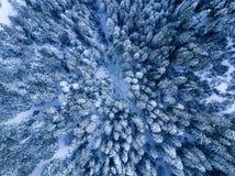 Взгляд глаза ` s птицы леса зимы Snowy воздушный Стоковые Изображения