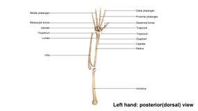 Взгляд левой руки польностью задний надфюзеляжный бесплатная иллюстрация