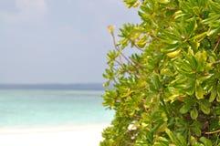 Maldivian пляж Стоковое Изображение RF