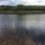 Взгляд дерева около озера в пасмурной ненастной погоде в лете Стоковое фото RF