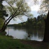 Взгляд дерева около озера в пасмурной ненастной погоде в лете Стоковые Фотографии RF